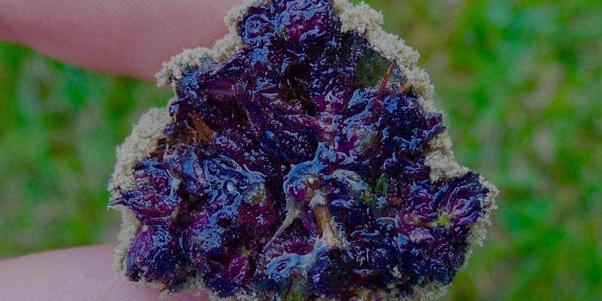 cannabis moonrocks