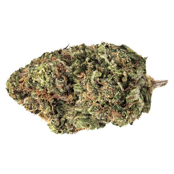 cannabis-7ACRES-Jack-Haze