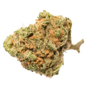 cannabis-SUNDIAL CANNABIS - Blue Nova
