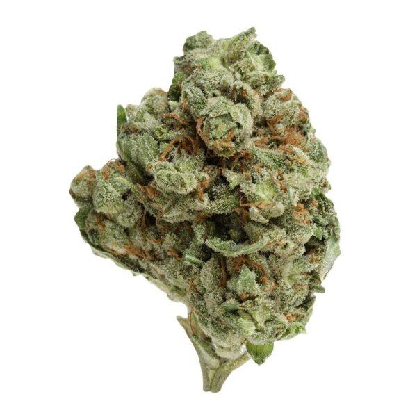cannabis-up-Ghost Train Haze