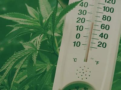 weed temperature