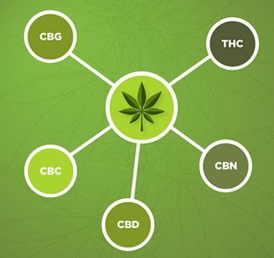Cannabis-cannabinoids