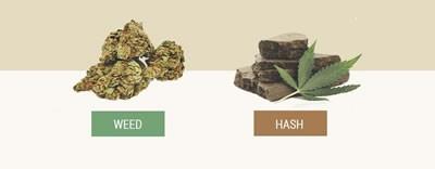 weed vs hash